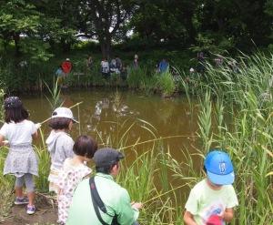 外来生物アメリカザリガニ採りの始まり、始まり! 釣ったことのない子がほとんどだった。