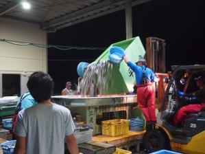 写真1:思いの外の漁獲量
