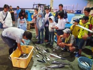 写真2:お魚調べ