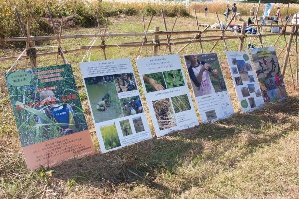 ④馬入水辺の楽校自然展